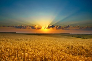 An image of a sunset over a golden field