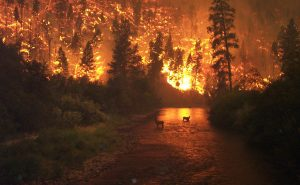 wildfire-and-elk_OR-Dept-of-Forestry
