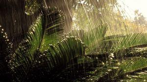 sukkot rain palm