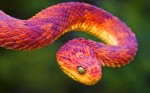 snake colorful