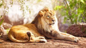 Lion-Spirit-Animal