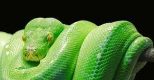 snake pixabay com